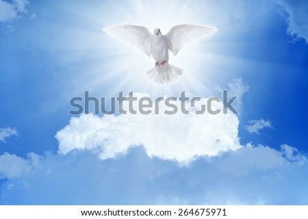 Holy spirit bird - white dove flies in blue sky, bright light shines from heaven - stock photo