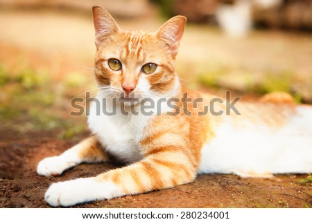Home cat with warm color posing for camera - stock photo