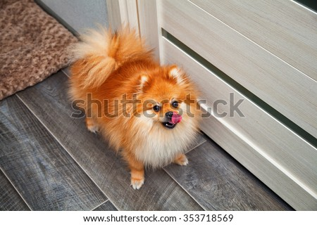 home dog - stock photo