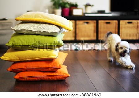 home environment. Colorful pillows, and dog. Soft focus. - stock photo