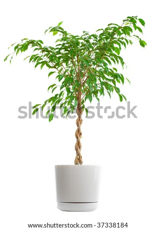 Home green plant. Isolated over white background