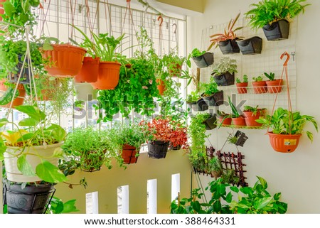 Home grown flowers and herbs in the hanging pots at balcony at Ang Mo Kio area. Growing a garden in a sharing apartments balcony/corridor is popular in Singapore. Great for urban farm publications. - stock photo