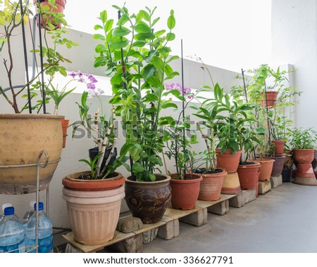 Home grown flowers, vegetable and herbs in the pots over balcony of public housing (HDB) flats in Singapore. Growing trees in a sharing neighbourhood apartment's balcony is very popular in Singapore - stock photo