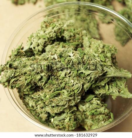 Home Grown Marijuana, Cup Full of Out Door Cannabis  - stock photo