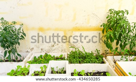 Home grown vegetable in the styrofoam boxes over balcony of apartment building in Hanoi. Great for agriculture publication. Growing trees in apartments balcony container is popular in Vietnam. Vintage