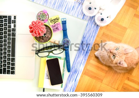 Home interior living room with cat sitting on the wooden floor. Cozy house concept with technological objects, books, watch and colored cactus on the table. Home sweet home, with household stuff. - stock photo