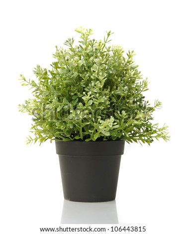 Home plant in pot isolated on white background - stock photo