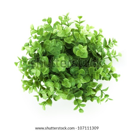 Home plant isolated on white background - stock photo