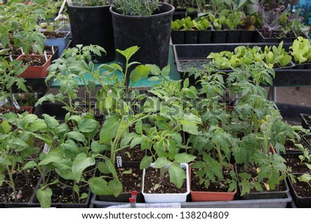 Homegrown plants for sale at a farmers market