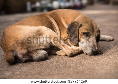 Homeless abandoned brown dog sleeping on the street - stock photo