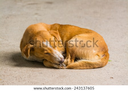 Homeless abandoned dog sleeping on the street - stock photo