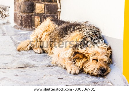 Homeless abandoned dog sleeping on the street - stock photo