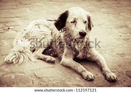 Homeless and hungry dog abandoned on the streets - stock photo