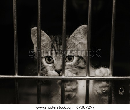 Homeless animals. Kitten looking out from behind the bars of his cage - stock photo