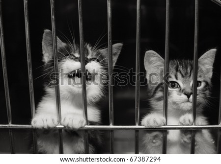 Homeless animals. Kittens looking out from behind the bars of his cage - stock photo