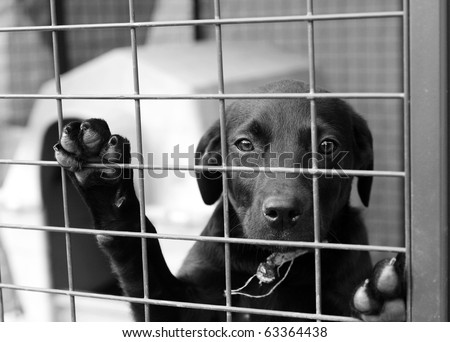 Homeless animals series. Black mongrel dog looking out through the wire of his cage. Black and white image - stock photo