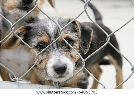 Homeless animals series. Cute pup looking out through the wire mesh of his pen. - stock photo
