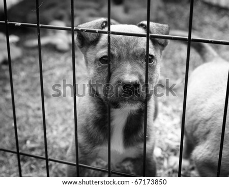 Homeless animals series. Pup looking out from behind the wires of his cage. Black and white image - stock photo