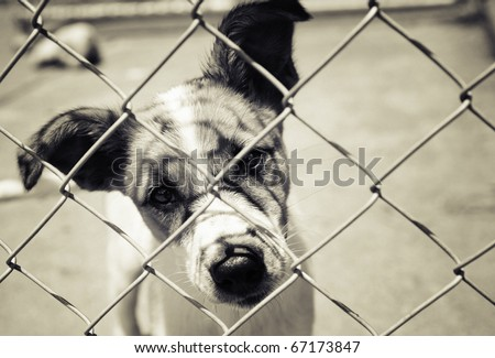 Homeless animals series. Pup looking out from behind the wires of his cage. Cross toned black and white image - stock photo