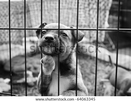 Homeless animals series. Pup pressing his nose through the bars of his cage. Black and white image