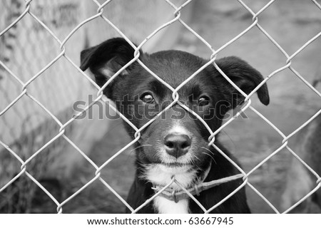 Homeless animals series. Sad pup looking out from his pen. Black and white image. - stock photo