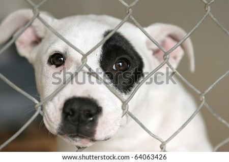 Homeless animals series. Sad white and black pup looking out through the wire mesh of her pen - stock photo