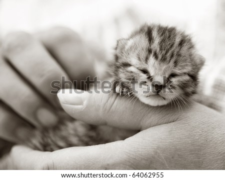 Homeless animals series. Tiny kitten in the hands of his foster carer. Black and white image - stock photo