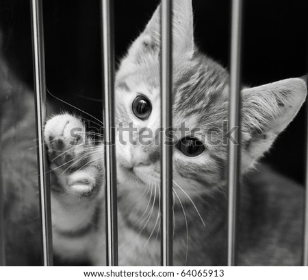 Homeless animals series. Young tabby kitten in a cage with his paw up. Black and white image