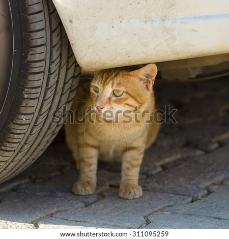 Homeless cat. - stock photo