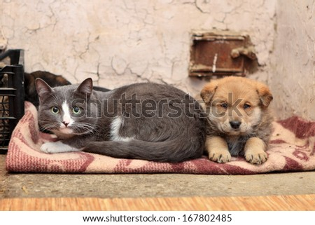 Homeless cat and dog on the rag - stock photo