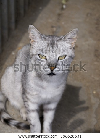 Homeless cat bus station of Feodosia in Crimea - stock photo