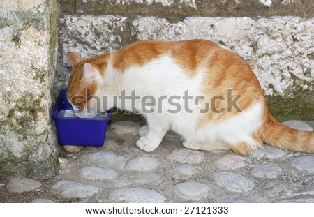 Homeless cat drinking milk on a street from a plastic bowl. - stock photo
