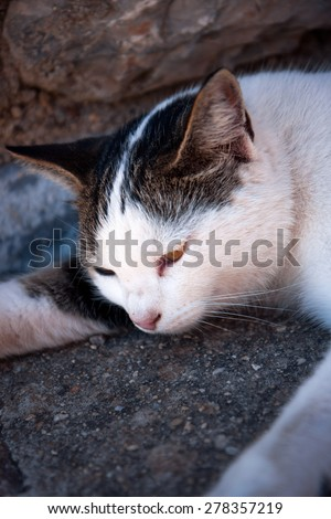 Homeless Cat lying in shadow, dreaming, thinking and relaxing - stock photo
