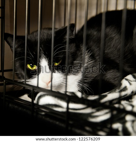 Homeless Cat - Rescued Feline in Cage recovering from Surgery - stock photo