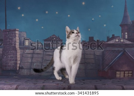 homeless cat walking on the roof at night - stock photo