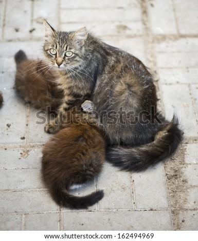 homeless cat with kitten - stock photo
