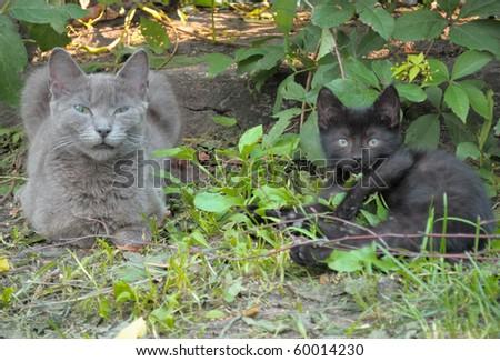 Homeless Cats - stock photo