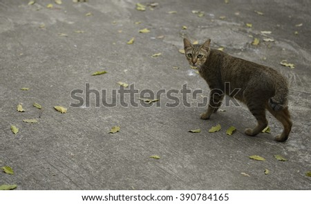 homeless cats in autumn leaves - stock photo