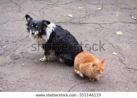 Homeless comrades, cat and dog - stock photo