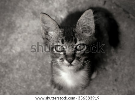 Homeless Cute kitten - black and white