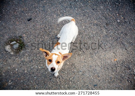 Homeless dog asking for food - stock photo