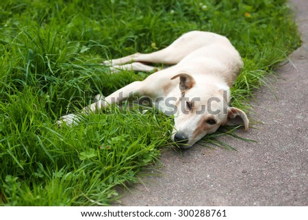 Homeless dog is laying on the grass - stock photo