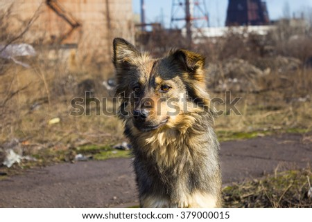Homeless dog on the street  - stock photo