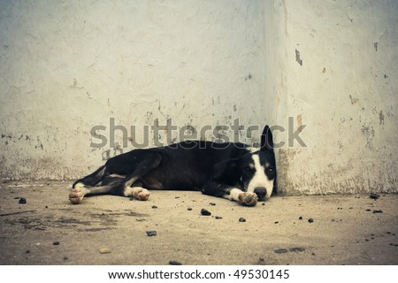 Homeless dog sleeping near by wall. - stock photo