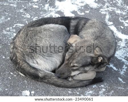 Homeless dog sleeping on cold sidewalk - stock photo