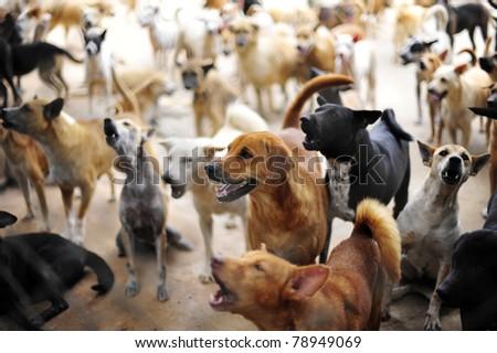 Homeless dogs - stock photo