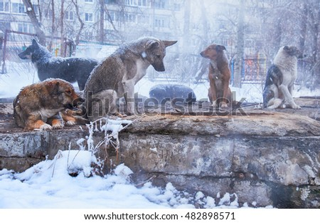 Homeless dogs in winter time heating on sanitaryware well