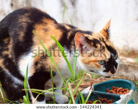 homeless hungry black brown cat eating cat food in a broke pet bowl - stock photo