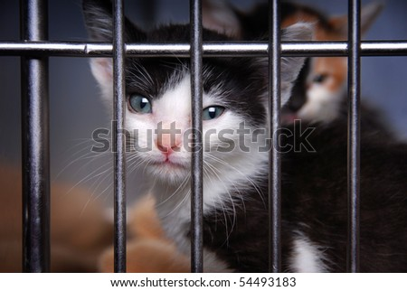 Homeless Kitten in a Cage - stock photo