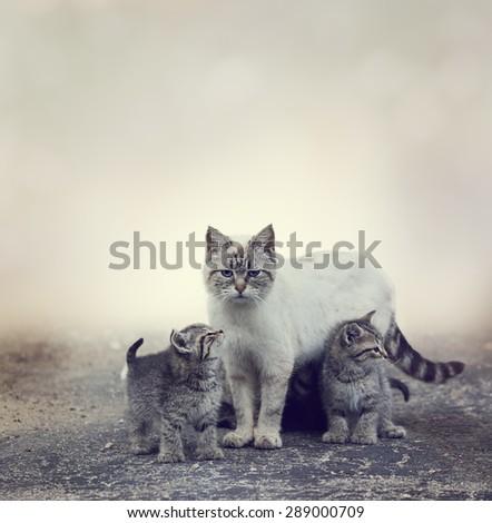 Homeless Kittens  Beside Their Mother Cat - stock photo